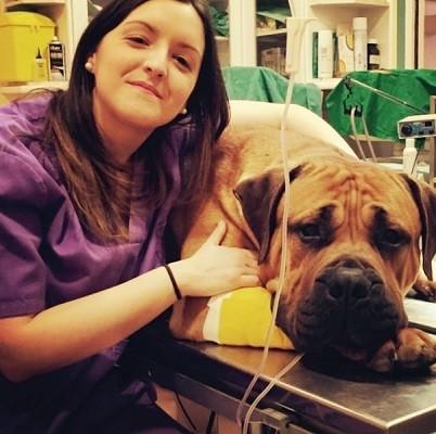 veterinario durango vizcaya