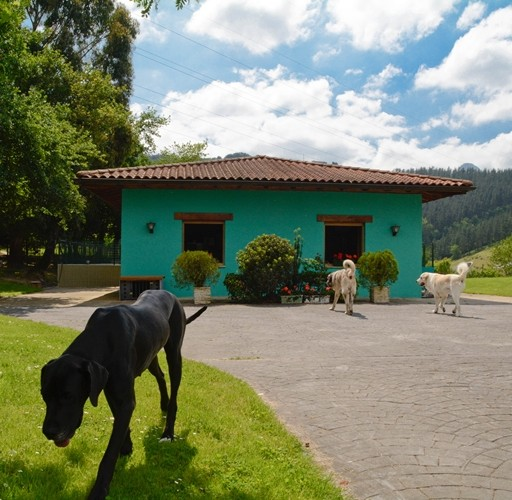 clinica veterinaria durango